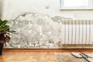 Mold, Home Inspection