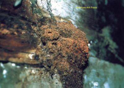 Moisture Ant Frass